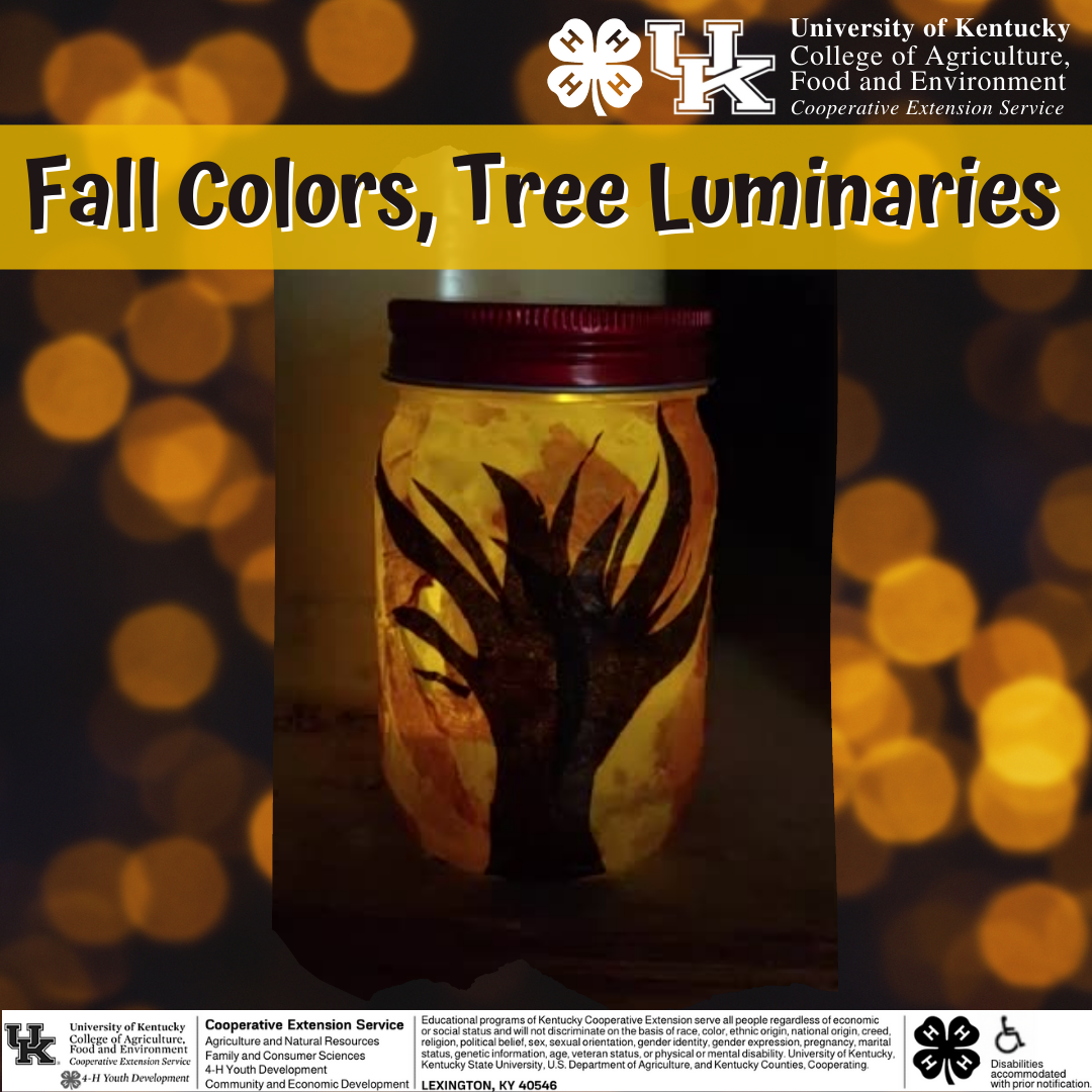 4-H project pack color luminaries