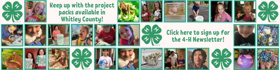 4-h email newsletter subscription